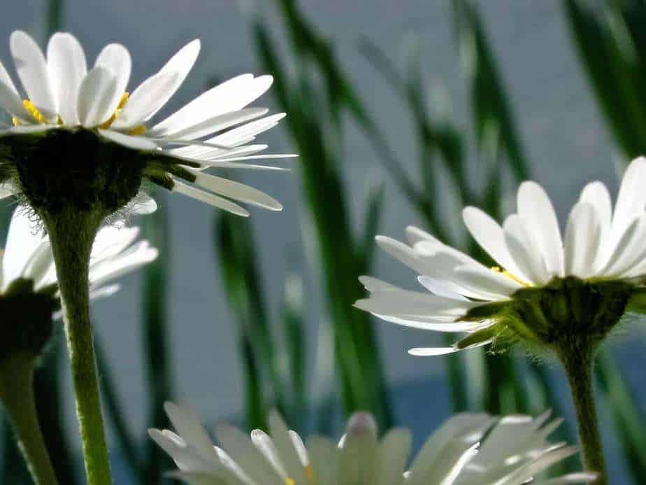 flowers-64127_1280