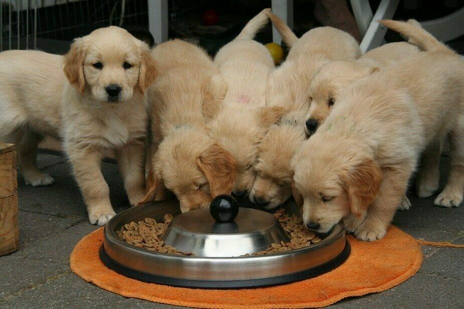mâncare de câini super premium